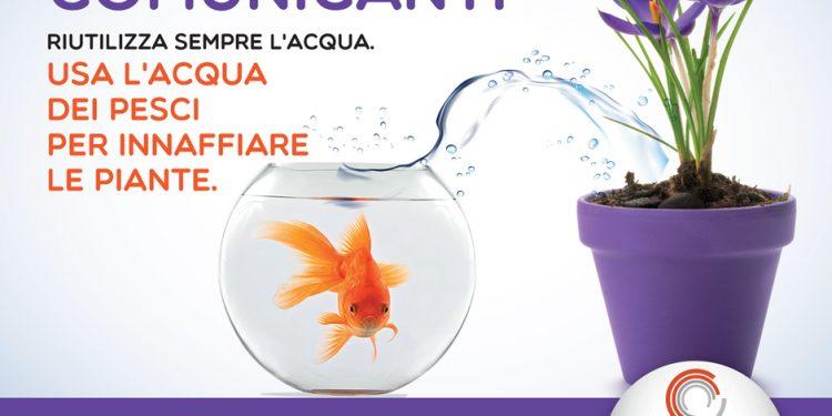Usa l'acqua dei pesci per innaffiare